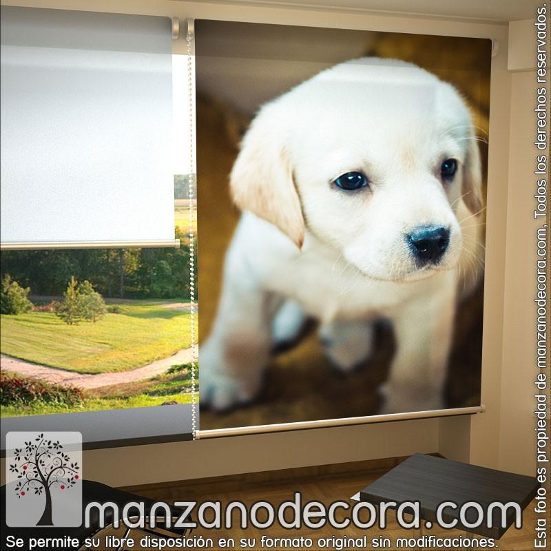 Estor Enrollable Fotogr Fico Animales Cachorro Perro 01